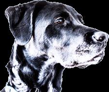 Autolavado de perros en Madrid