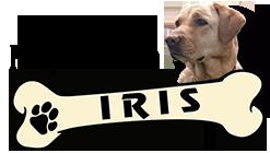 Peluqueria Canina y Autolavado de Perros Iris